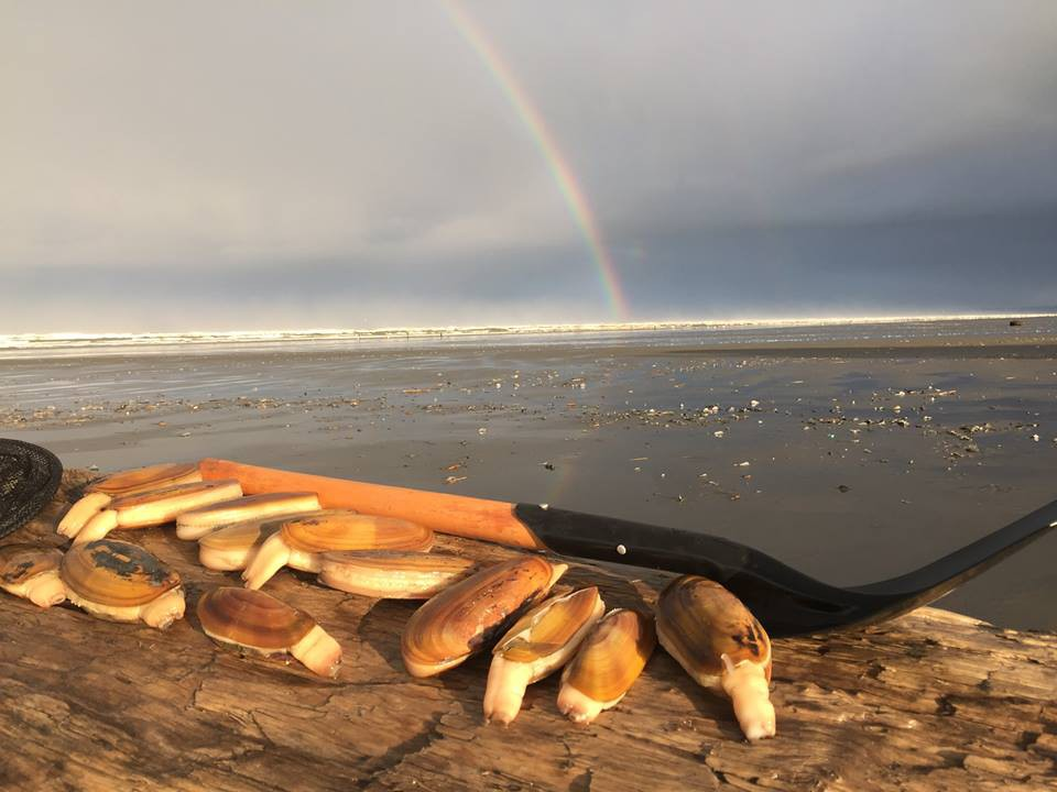 Razor Clam Digging right out your door