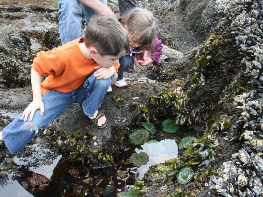 The tide pools (1 mile south of the home) offers fun for kids and adults alike