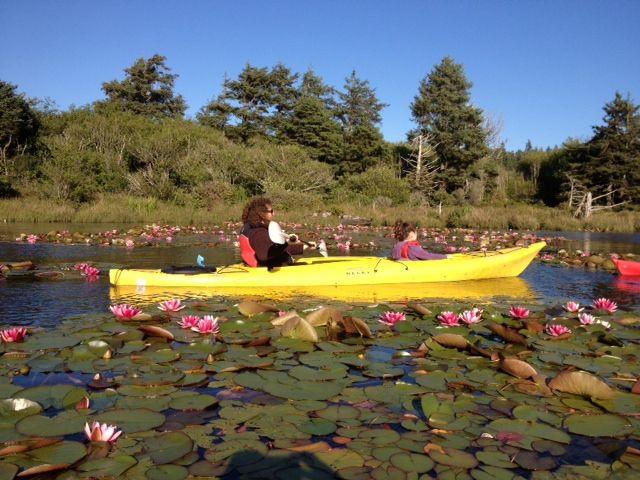 Kayaking trips! Call Marcus at Kayak Tillamook (503) 866-4808