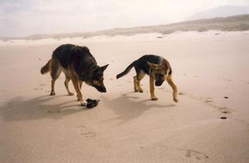 Gretchen & Heike at Tierra del Mar